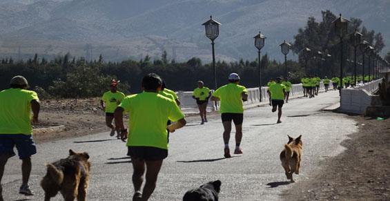 Maraton-Vicuna