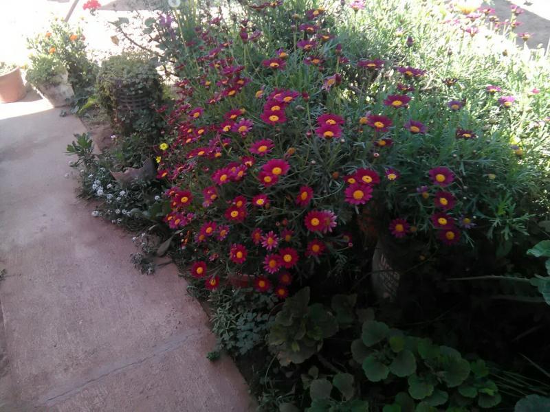 jardin-altovalsol2