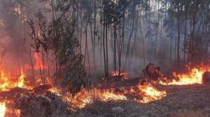 incendio-lasrojas3