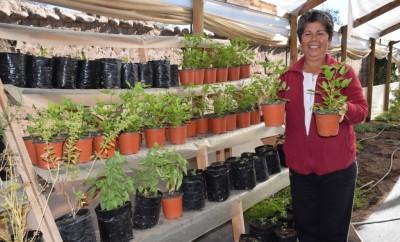 Herminia Araya plantas medicinales