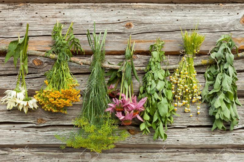 Descubre qué es la fitoterapia: el uso de plantas medicinales – La ...
