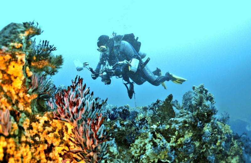 Imagen 2. Buzo sobre corales
