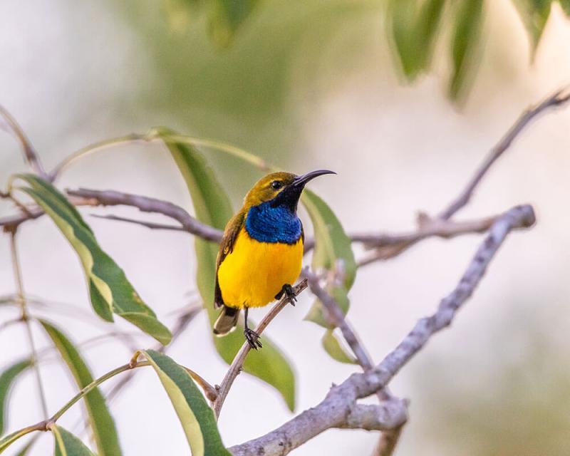 Canon Bird