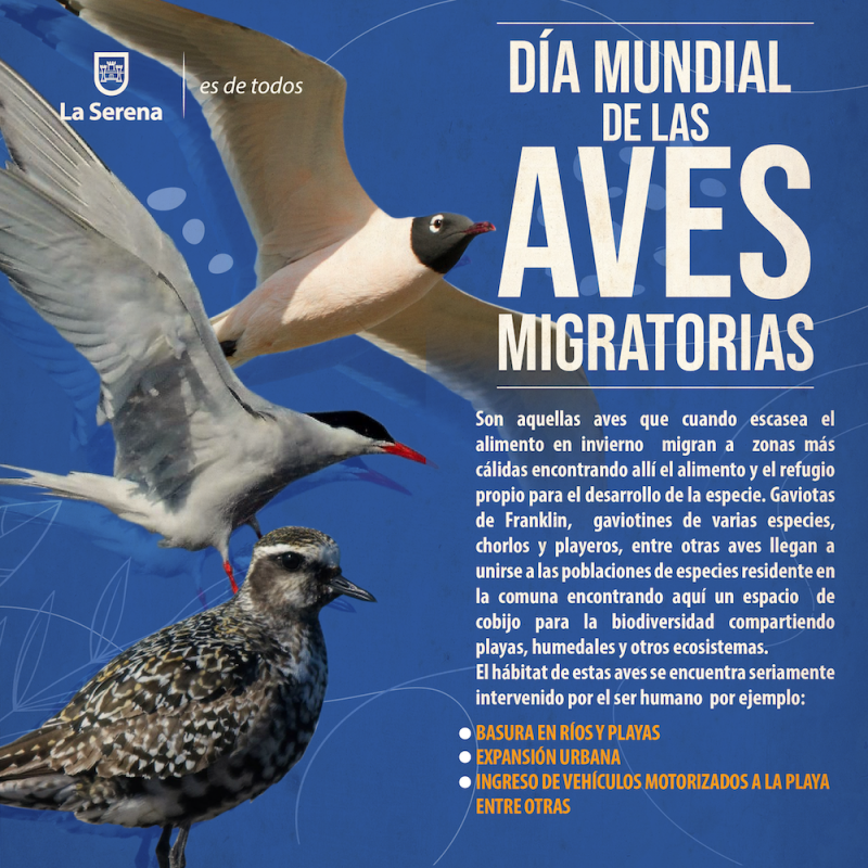 Aves-Migratorias2
